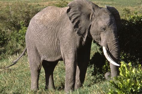 25 Environment : Wildlife : 314 332