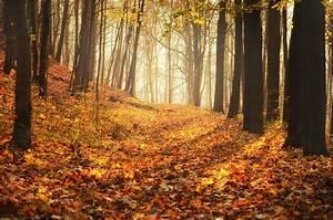 Autumn HD Wallpaper Backgrounds The Nology