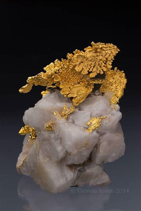 gold dragon  quartz bored panda