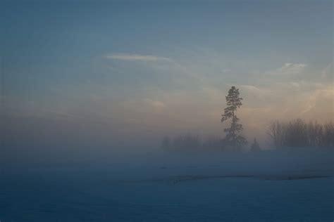 foggy day  imagine farm heather ogg blog