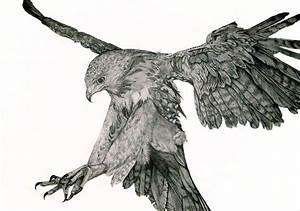Drawn hawk flight drawing - Pencil and in color drawn hawk ...