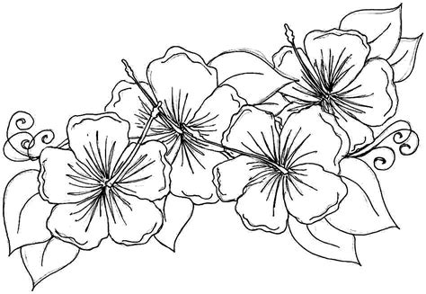 coloring page flowers free printable hibiscus coloring pages for