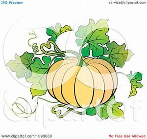 Pumpkin Plant Clipart - Clipart Suggest