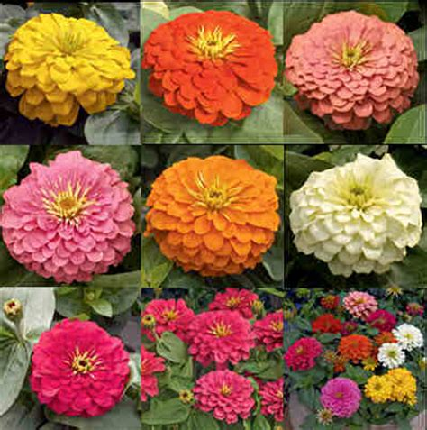 plant types annual perennial how are annuals and perennials different wonderopolis