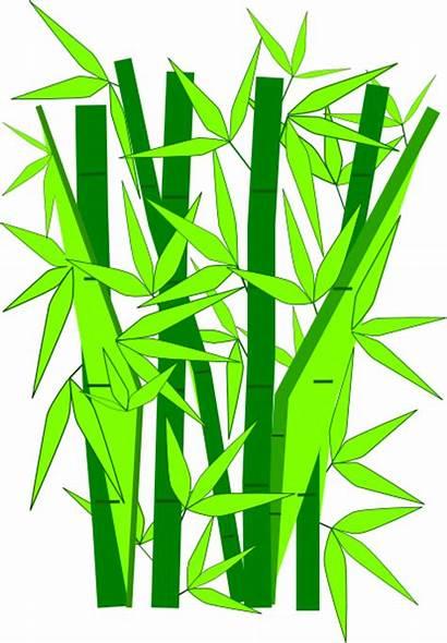 Bamboo Vector Clip Pohon Clipart Gambar Kartun