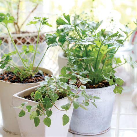 an indoor winter herb garden gardening earth living