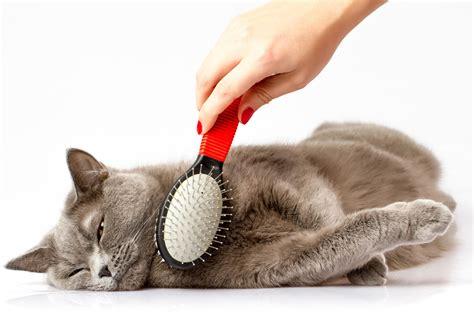cat grooming grooming beinnein