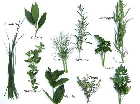 plantes aromatiques cuisine herbes aromatiques produits cuisine française
