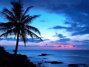 22 best images about Palm Trees on Pinterest   Beautiful ...
