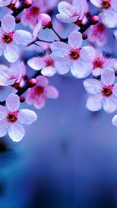 beautiful, anime, flower, wallpapers, -, top, free, beautiful, anime, flower, backgrounds