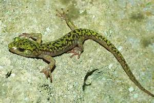 Green Salamander Facts and Pictures | Amphibian Fact