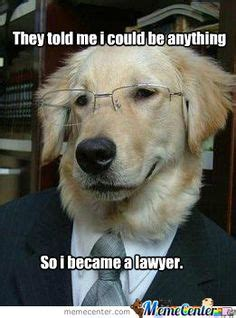 Law Dog Meme - 1000 images about lawyer on pinterest lawyers lawyer humor and gut feeling