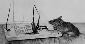 Mäuse Bekämpfen Haus : eine maus auf humane weise fangen so geht 39 s ~ Michelbontemps.com Haus und Dekorationen