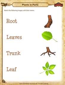 Plants Worksheets Plant Parts Worksheet Images