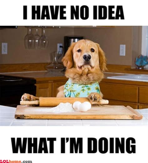 Dog Cooking Meme - cooking dog funny pic