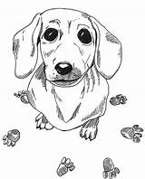 Dachshund Coloring Dog Pages Sausage Printable Drawing Adult Wiener Colouring Animal Dogs Sheets Mandala Drawings Template Adults Worksheets Books Weiner sketch template