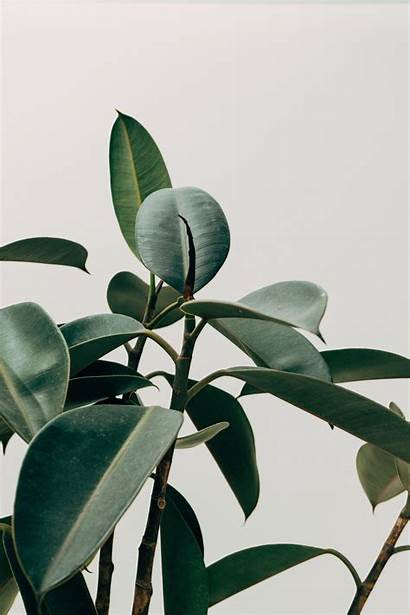 Plant Aesthetic Wallpapers Backgrounds Wallpaperaccess