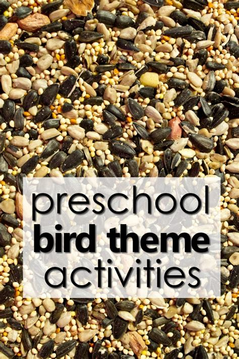 bird theme preschool activities fantastic fun learning