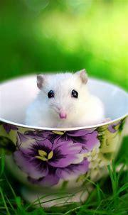 Cute Ferret Wallpaper (72+ images)