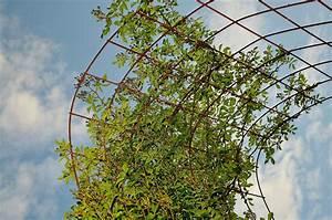 Freistehendes Spalier Bauen : garden trellis tips ~ Somuchworld.com Haus und Dekorationen