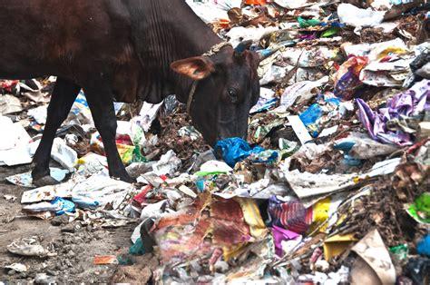 Jordan bans plastic bags, joining Kuwait, Qatar and the UAE   Green Prophet