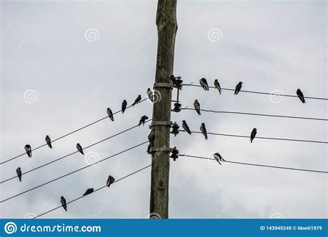 Reading a newspaper, i saw a picture of birds on the electric wires, recalled agnelli. Group Of Small Birds On Electric Wires Just Like A Music Score, In Joaquina Beach, Florianopolis ...
