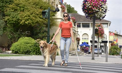 How You Can Celebrate National Seeing Eye Guide Dog