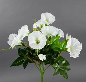 Orchideen Ohne Topf : petunienbusch 28cm wei ohne topf zf k nstliche pflanze k nstliche petunie kunstblume ~ Eleganceandgraceweddings.com Haus und Dekorationen