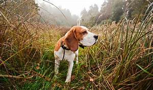 Best Hunting Dogs As Your Companion | Survival Life
