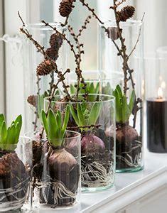 hyazinthen glas deko fruehling weihnachten dekoration