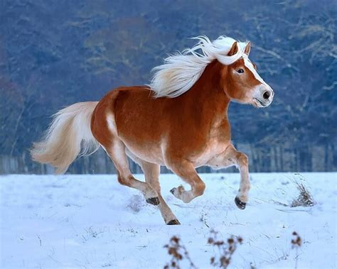 horses snow winter animals ponies hd run horse wallpapers desktop running pony wild nice mane animal detail mare wallpapersafari eyes