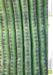 cactus textures stock photo image  stem spine cactus