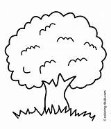 Coloring Tree Pages Printable Nature Adults Roots Apple Olive Children Leafless Trees 4kids Template Sheet Preschoolers Fall Pdf Getcolorings Outline sketch template