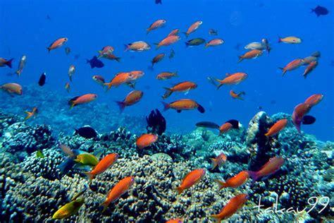Coral Reef, Okinawa Japan   taken while scuba diving at ...
