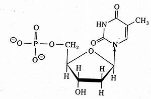 Image Gallery nucleic acid structure