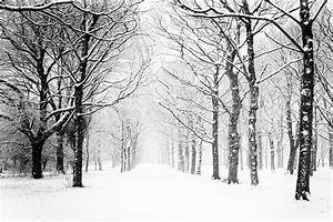 350+ Snowing Pictures   Download Free Images on Unsplash