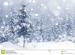 Sonne Im Winter : nebeliger wald im winter stockbild bild von magie sonne ~ Lizthompson.info Haus und Dekorationen