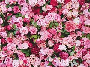 Flower Wall Rentals, Wedding Decor