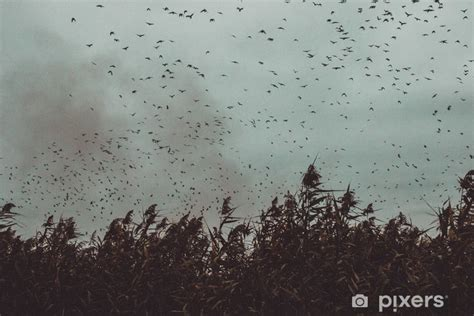 Bunch Of Birds Flying Close To Cane In A Dark Sky- Vintage