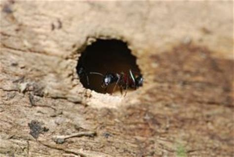 Where do ants go in the winter? – Wild About Ants