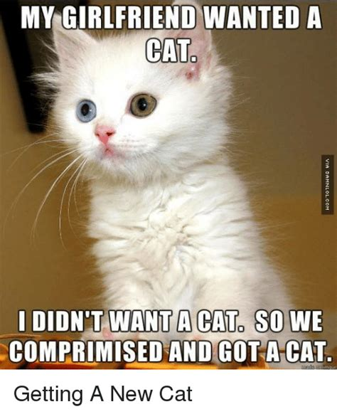 New Cat Meme - my girlfriend wanteda cat didn t want a cat so we comprimised and got a cat getting a new cat