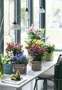 Pflegeleichte Pflanzen Für Die Wohnung : gr ne nomaden sind zimmerpflanzen des monats mai welche ~ Michelbontemps.com Haus und Dekorationen