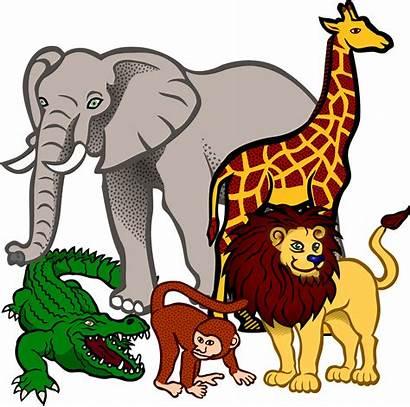 Jungle Clipart Animal Terrestrial Transparent Africa Animals