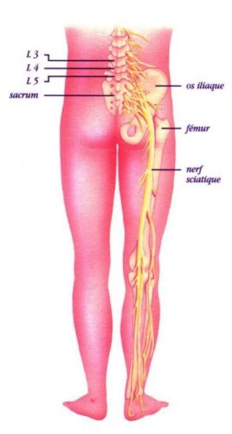 douleur a l interieur de la cuisse 28 images pubal douleur de la cuisse sympt 244 mes