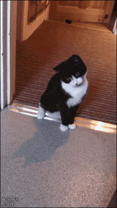 funny cat  scared gif luvbat