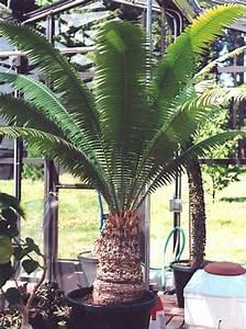 Palmfarm Catalogue