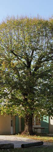chambre d hotes dans les arbres le chai gîte rural chambre d 39 hôtes cabane perchée