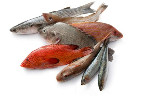 fish  fish red fish blue fish