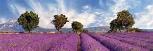 Autodiscount Aix En Provence : location vacances aix en provence pierre et vacances ~ Medecine-chirurgie-esthetiques.com Avis de Voitures