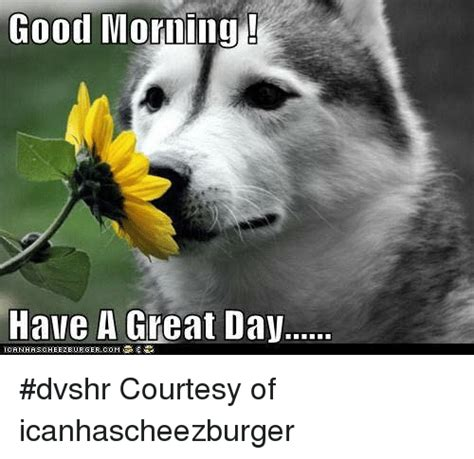 Have A Good Day Meme - good morning have a great day dvshr courtesy of icanhascheezburger meme on me me